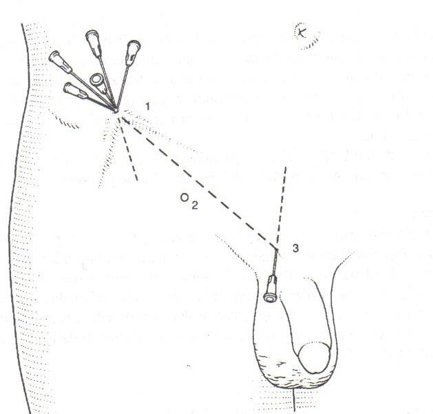 resim 1.jpg